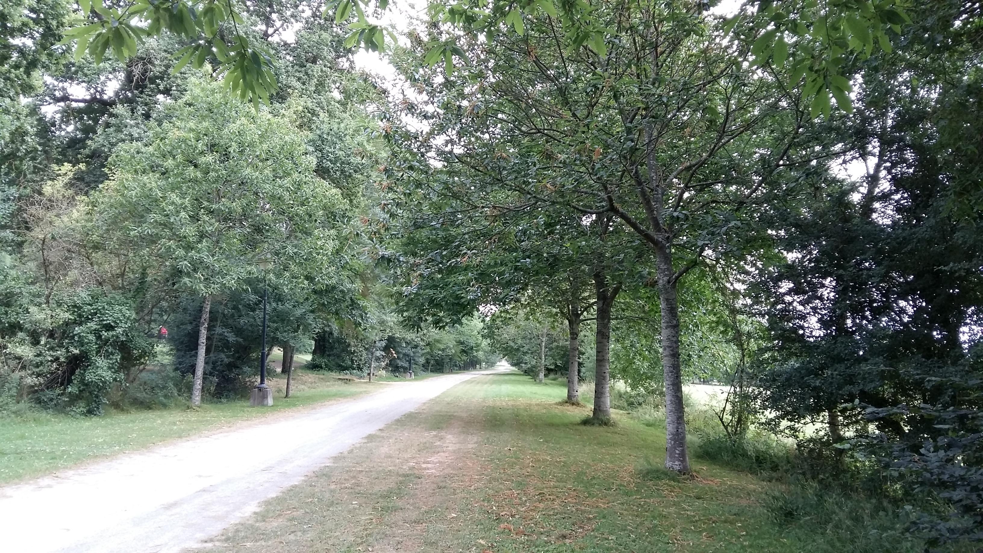 Chênes pédonculés et écarlates et Châtaigniers (allée Royale)