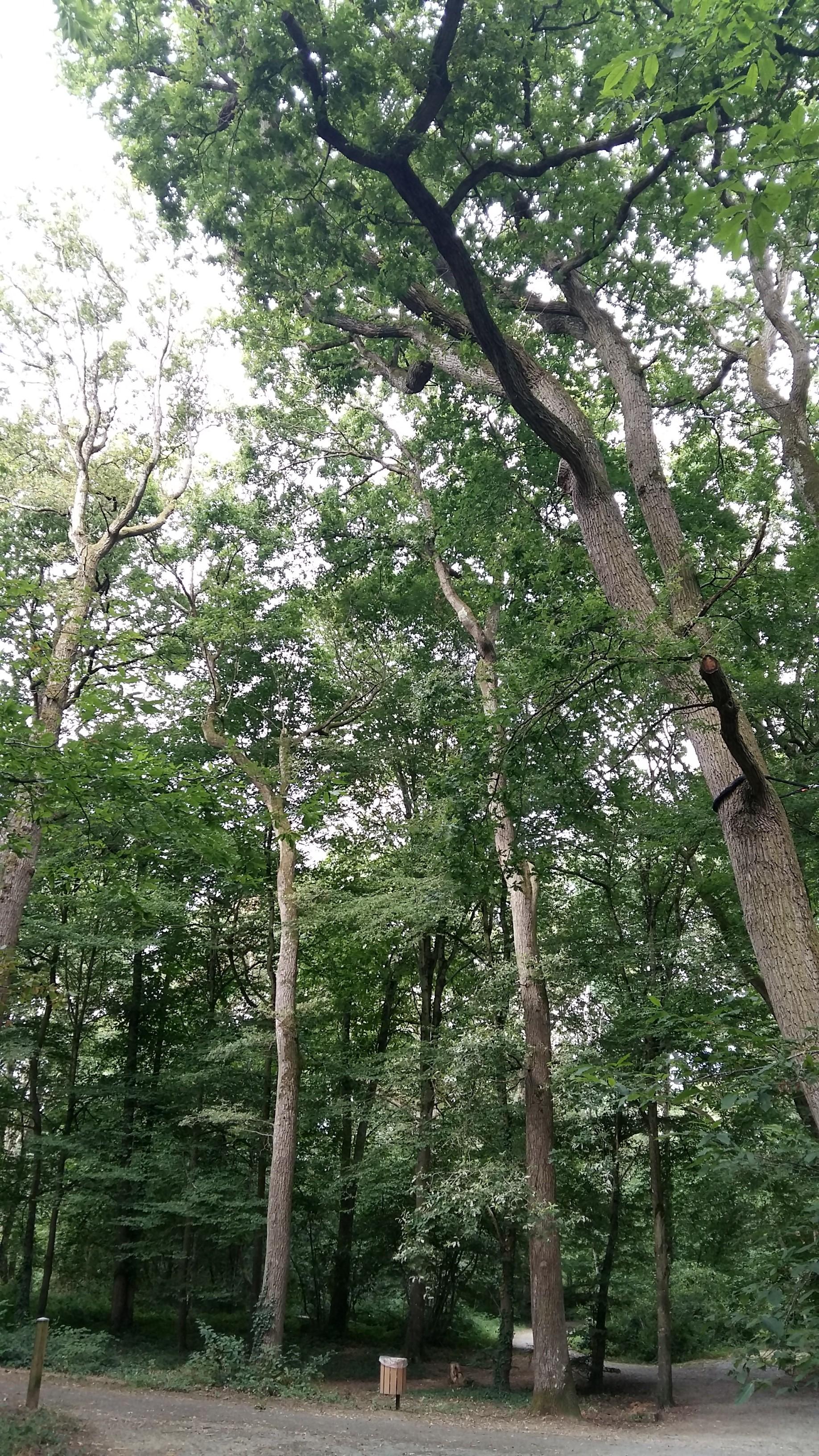 parc des Poumons verts (arbres remarquables)